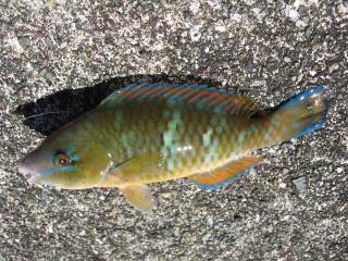 Koko0128